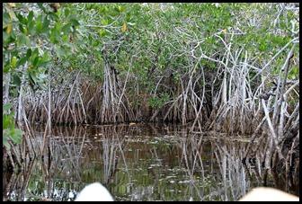 04h - Noble Hammock Canoe Trail - narrower