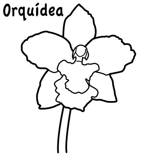 Orquideas para colorear - Imagui