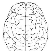 cerebro-visto-desde-arriba-4300.jpg