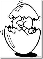 pollos y patos pascua (6)