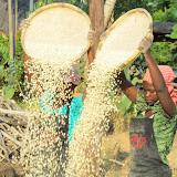 Maïs schoonmaken