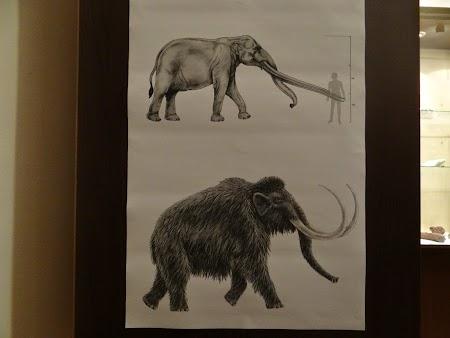 05. Mastodont si mamut.JPG