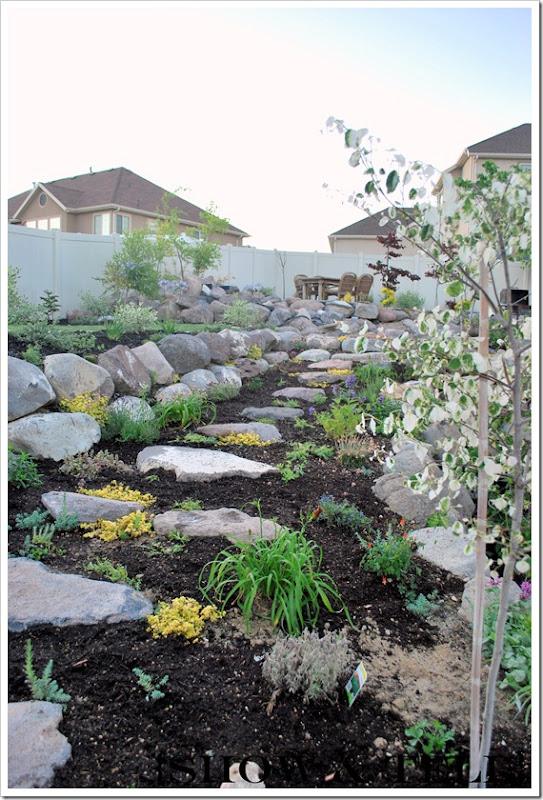backyard 2011 017