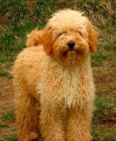 Sire Rainier&#039;s Clover,<br />