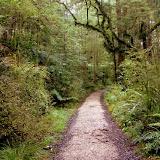 The Walk to Honeycomb Hill - Karamea, New Zealand