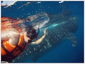 Плаваем с китовыми акулами. Канкун. Мексика. www.timeteka.ru