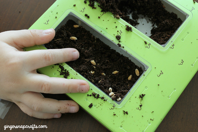 #kiwisummerfun planting seeds