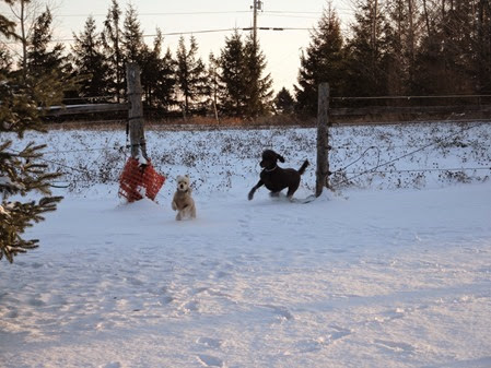 20141213_163718-dogs-play