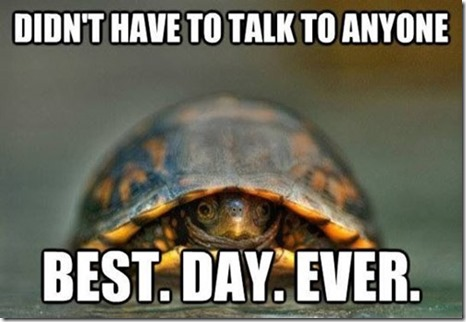 introvert turtle