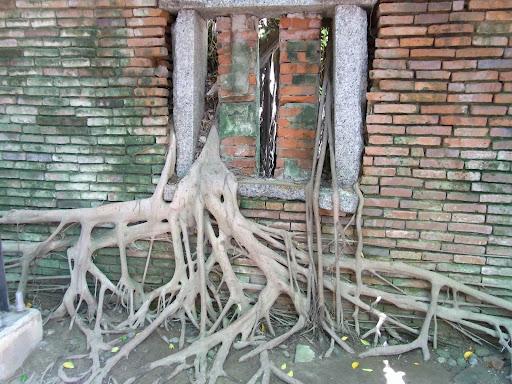 家がね、木にね、飲み込まれてるのね。