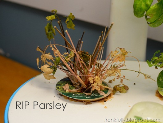 RIP Parsley