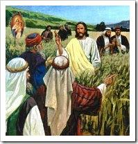 Jesus e os fariseus [discipulos comem espigas de milhos]