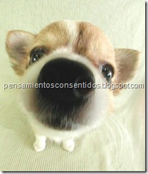 1220463844_puppies-27