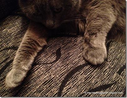 Katt ormbiten3