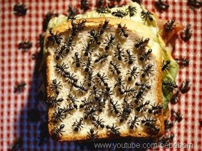 formiga em alimentos