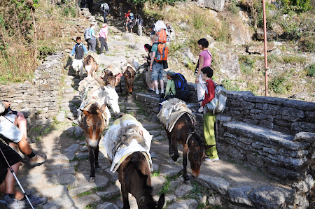 Trekking in Himalaya: Traffic Jam de magari