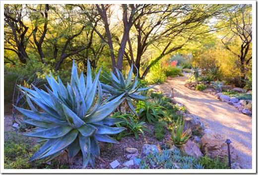 131203_TucsonBotanicalGarden_194-2