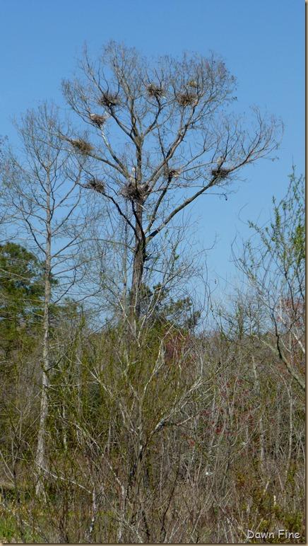 Magnolia Plantation_494