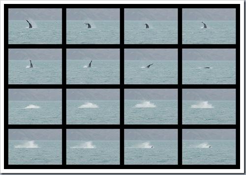 whale filmstrip 01