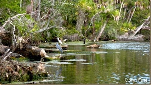 Chassahowitza River canoeing_155
