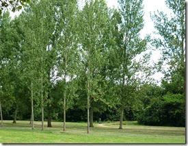 3 newlands park MK