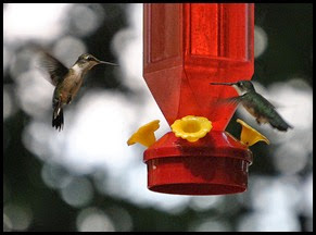 4b - Hummingbird