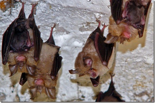 hembras reproductoras con crías