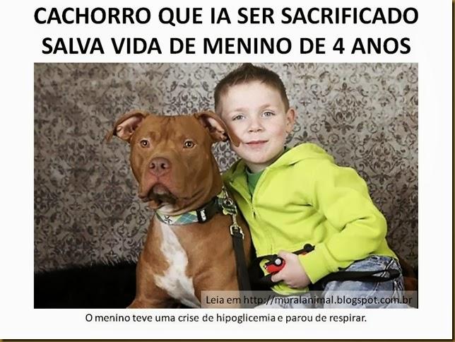 CACHORRO QUE IA SER SACRIFICADO SALVA VIDA DE