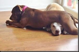 dogs_assholes_28