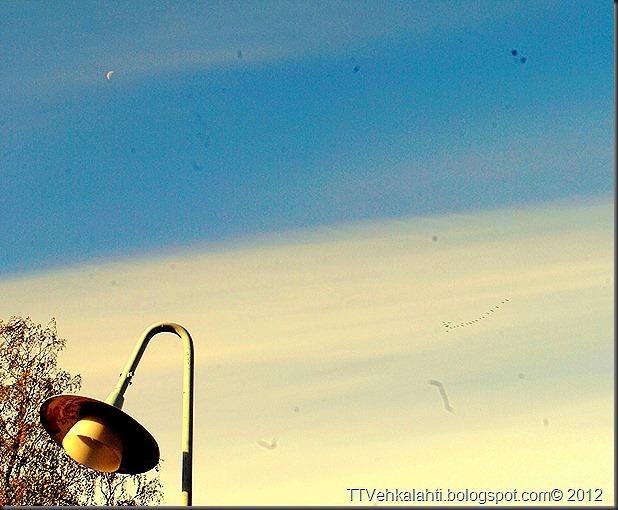aamu lintuja kuu M koski 014