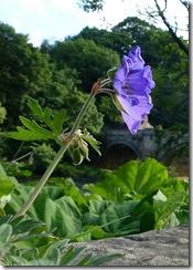 richmond bridge flora