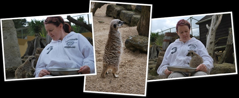 View Jackie Meerkat Encounter