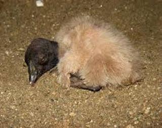 Amazing Pictures of Animals, Photo, Nature, Incredibel, Funny, Zoo, Andean Condor, Vultur gryphus, bird, Alex (13)
