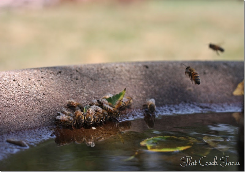 bees_thirsty