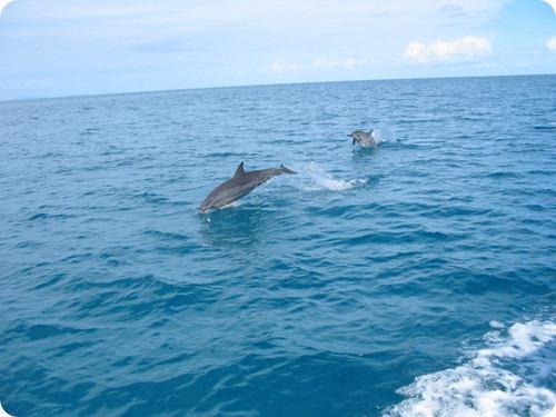 delfini9
