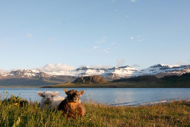 Iceland-3731