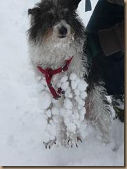 6 jan10 snow 029