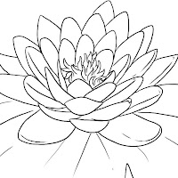 how-to-draw-a-lotus-flower%252C-water-lily-step-5.jpg