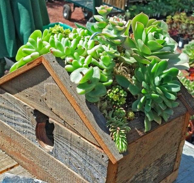 succulent-birdhouse1