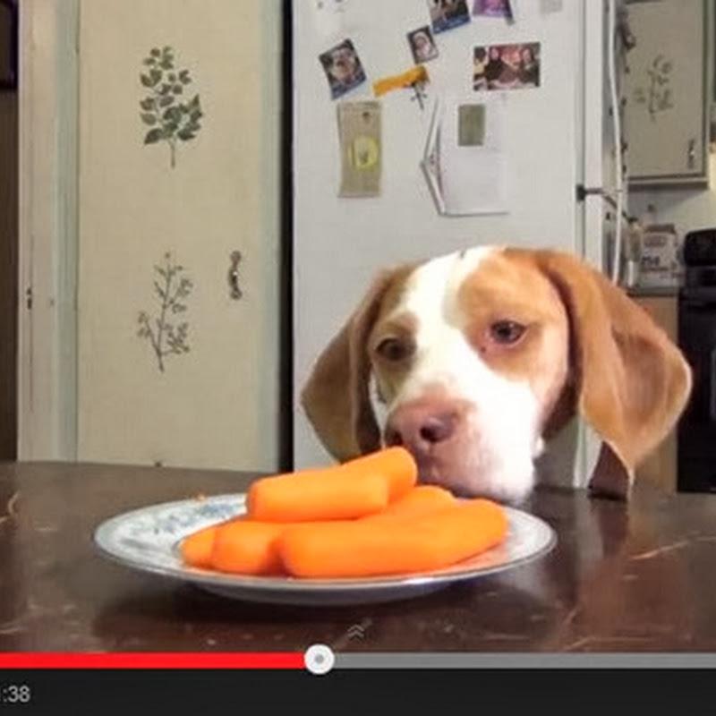 Σκύλοι κλέβουν τα καρότα