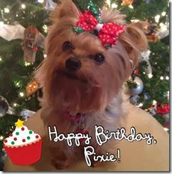 Happy Birthday Pixie