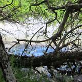 Paniaka Pond
