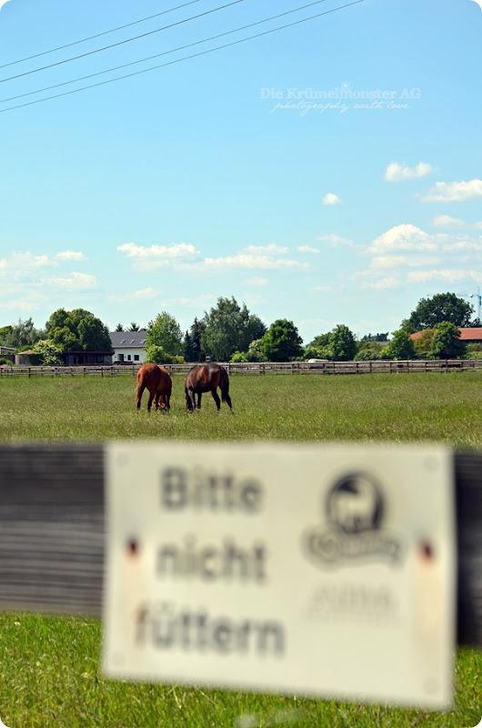 Hunderunde (14) Erdbeerfeld 16052014