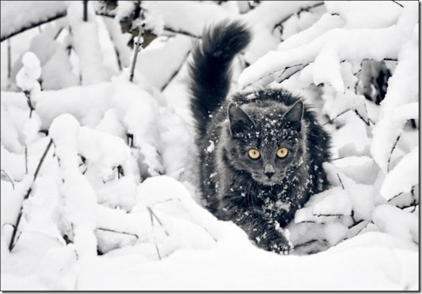 cats-play-snow-16