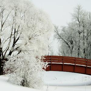 Kings Park Bridge.jpg