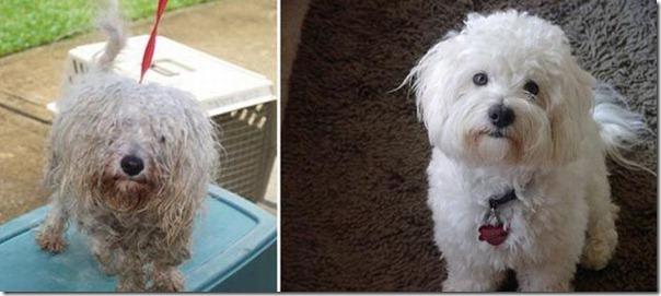 Animais Antes e Depois do Resgate (10)