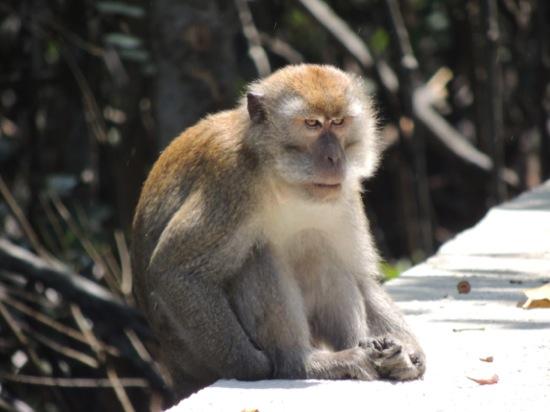 Monkey in the sun...