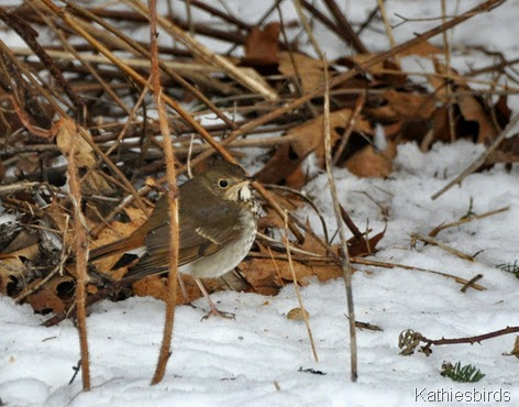 4. hiding in the thicket-kab