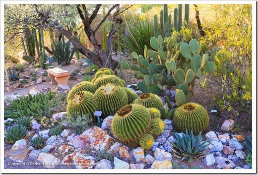 131203_TucsonBotanicalGarden_186