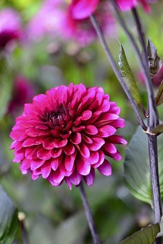 20120824_053909 - Purple Flame